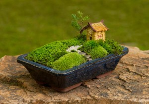 Dish garden with bonsai (photo credit: Moss and Stone Gardens)